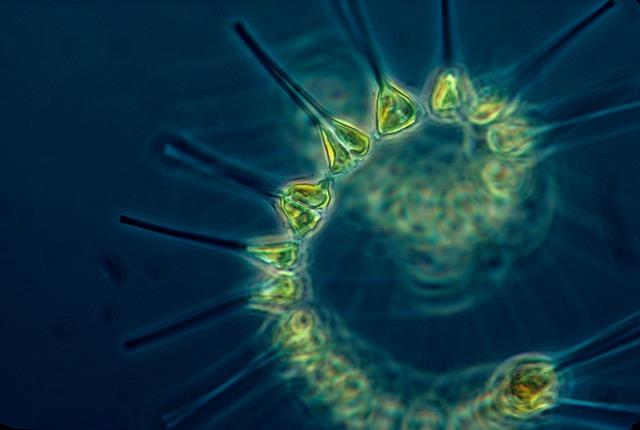 Планктон прибережної зони