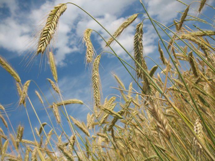 Розвиток агробізнесу