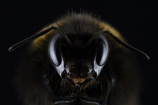 Бджільництво (реферат)
