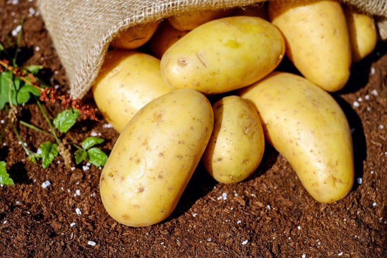 Поради до підготовки овочів
