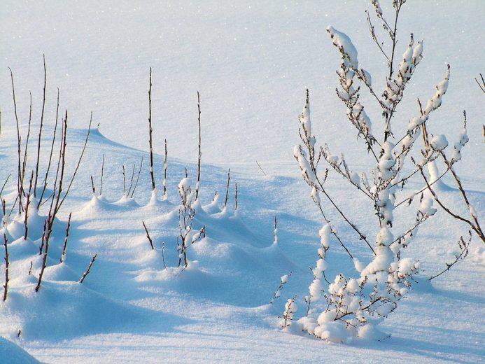 Зимові звичаї