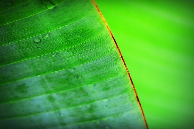 Хемосинтез і фотосинтез: загальна характеристика (реферат)