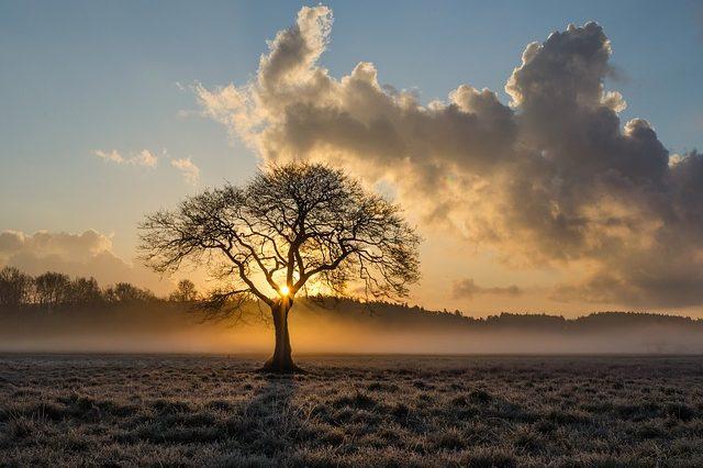 Дерево цілей підприємства і методи його побудови (курсова)
